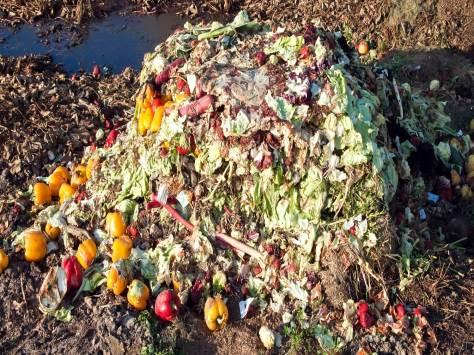 Fresh Food Waste