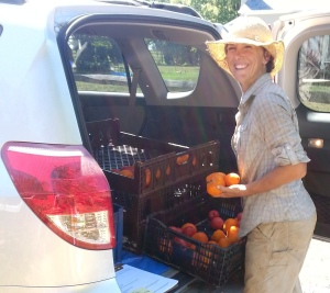 Farmer Amanda Cather loads surplus organic tomatoes for donation.