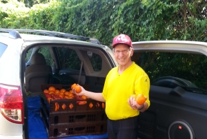 Volunteer food runner transports tomatoes from Plow and Stars farm to Shepherd's Table.